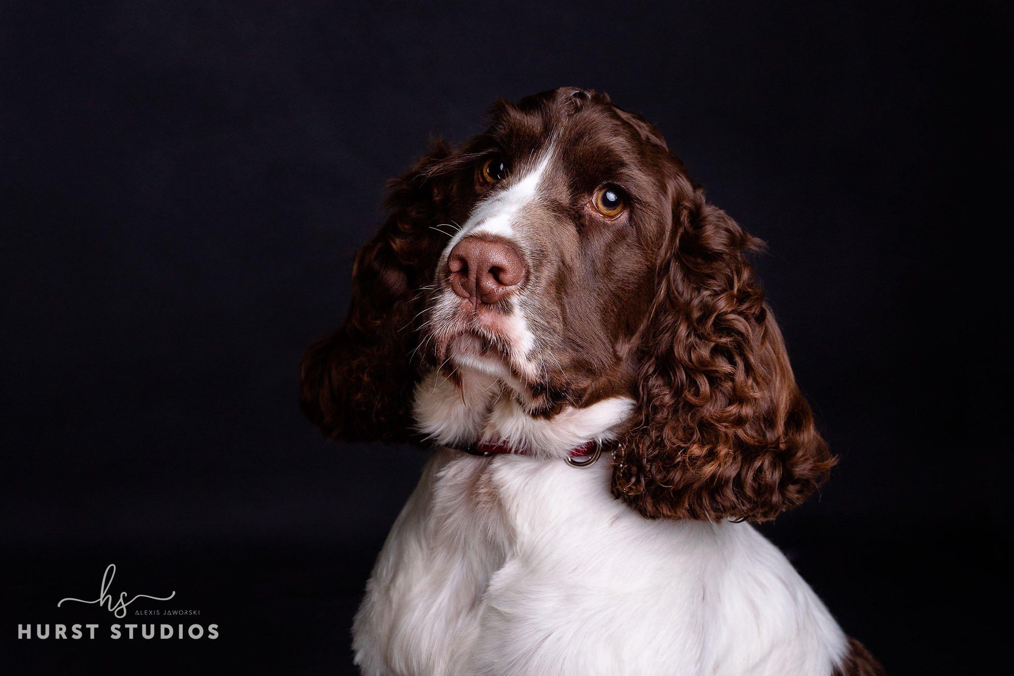 Pet Photography Berkshire